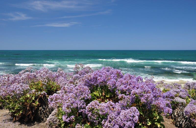 Flores costeras fotografía de archivo libre de regalías
