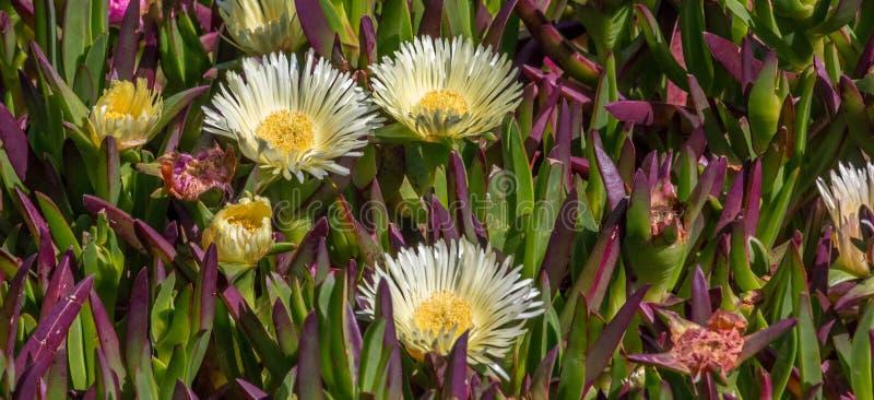 Flores costeras foto de archivo