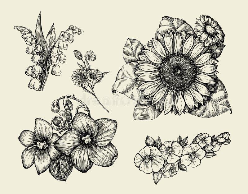 Flores Dé la flor exhausta del bosquejo, girasol, lirio blanco, violeta Ilustración del vector ilustración del vector