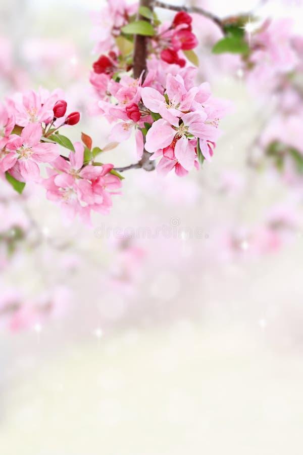 Flores da árvore da mola fotos de stock royalty free