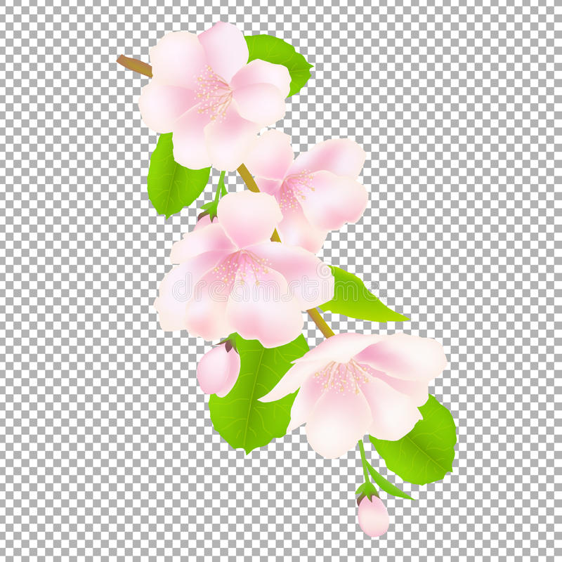 Flores da árvore de Apple ilustração do vetor