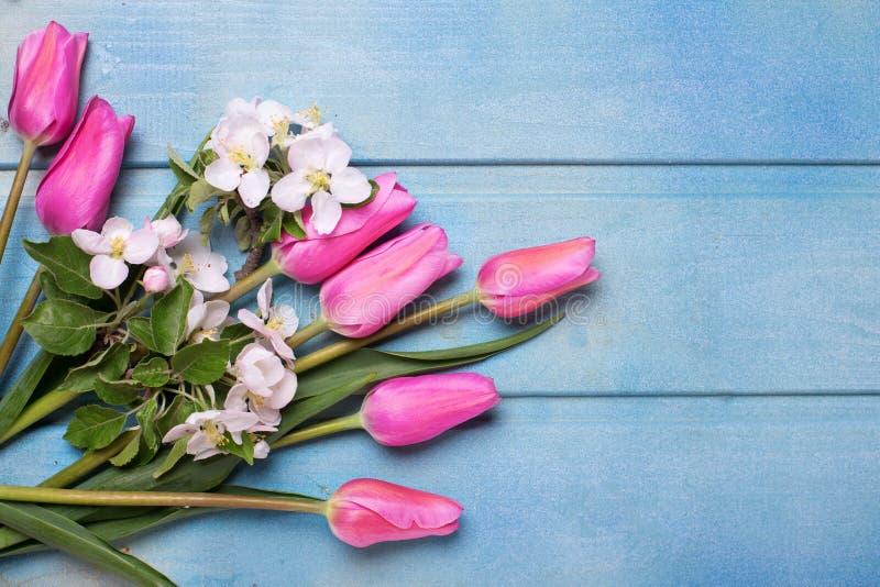 Flores da árvore de Apple e tulipas cor-de-rosa no fundo de madeira azul fotos de stock royalty free