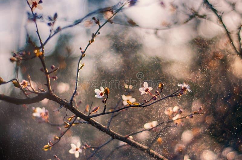 Flores da árvore na primavera foto de stock