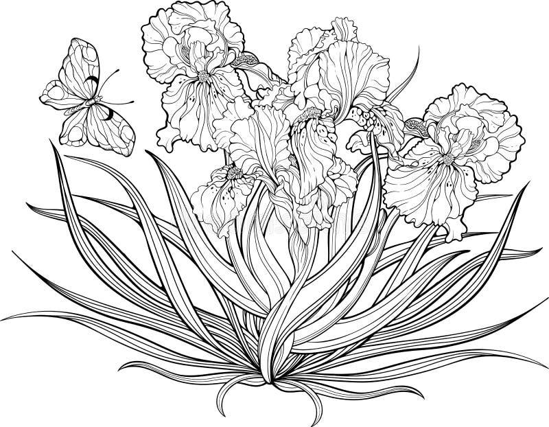 Flores da íris e uma borboleta Página da coloração ilustração royalty free