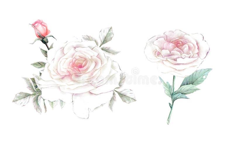 Flores da aguarela ilustração floral, folha e botões Composição botânica para o casamento ou o cartão ilustração do vetor