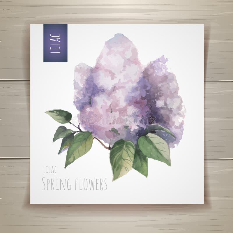Flores da aguarela lilac ilustração stock