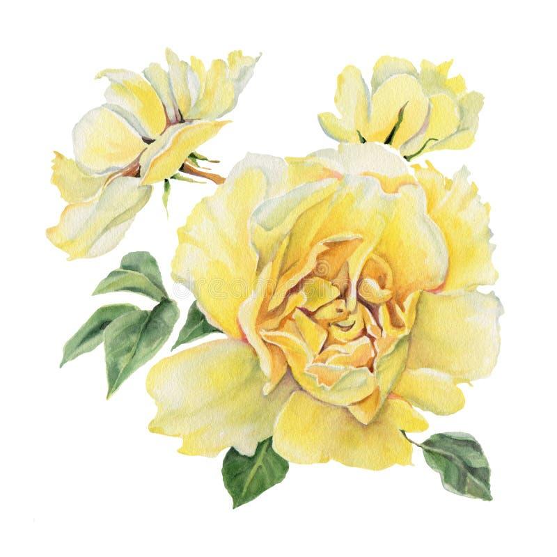 Flores da aguarela rosas ilustração do vetor