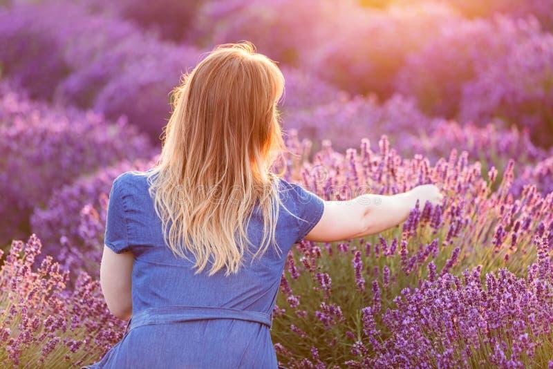 Flores da alfazema da colheita da jovem mulher no por do sol imagem de stock royalty free
