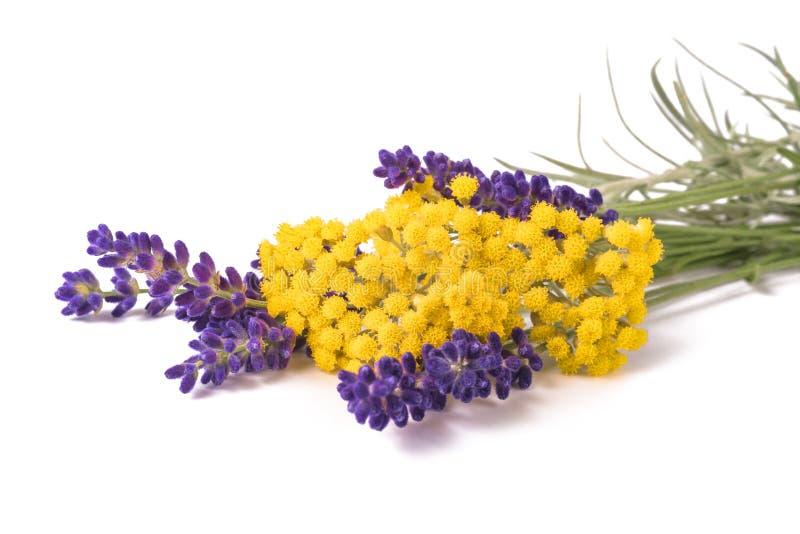 Flores da alfazema e do helichrysum imagens de stock