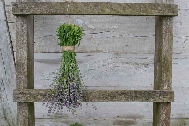 flores da alfazema em uma secagem de madeira da cerca fotografia de stock royalty free