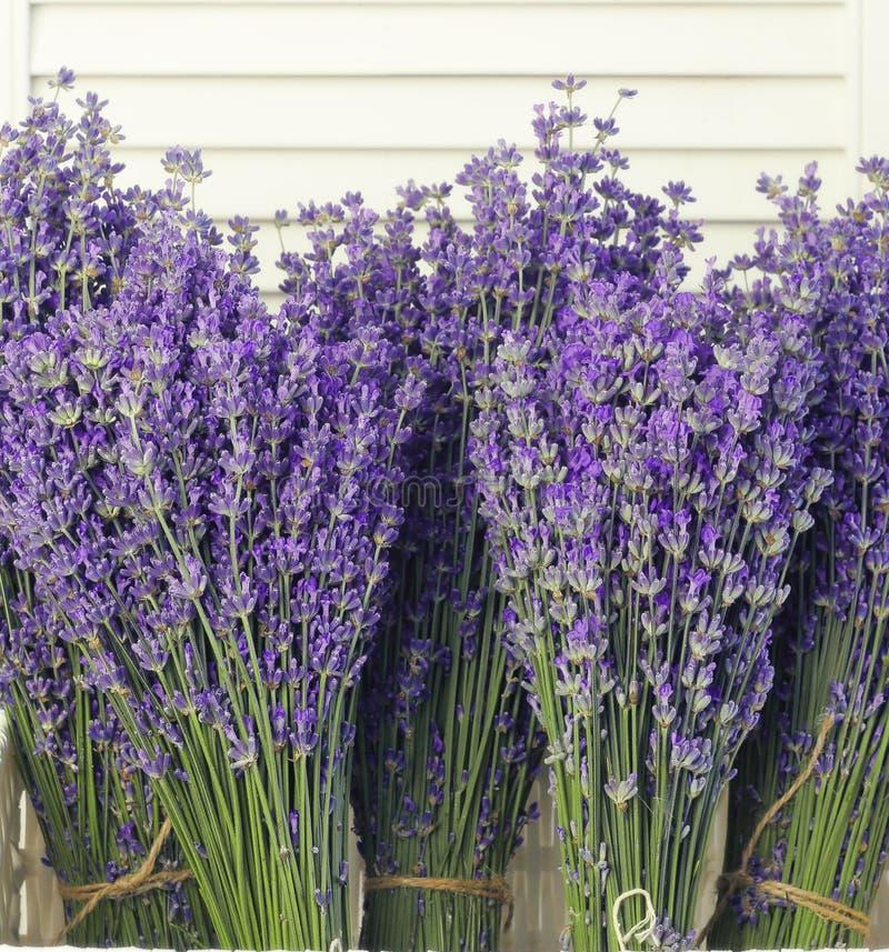 Flores da alfazema no close up imagens de stock