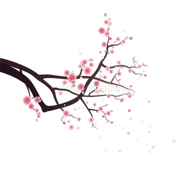Flores da ameixa na filial de árvore ilustração royalty free