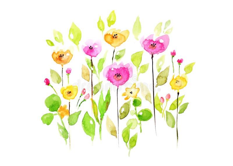 Flores da aquarela no fundo branco ilustração do vetor