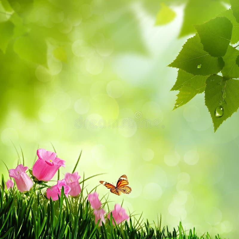 Flores da beleza. imagem de stock royalty free
