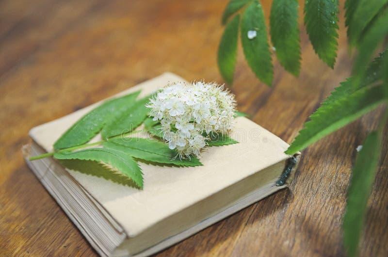 Flores da cinza de montanha e de um livro em um fundo de madeira Close-up, foco seletivo fotografia de stock royalty free