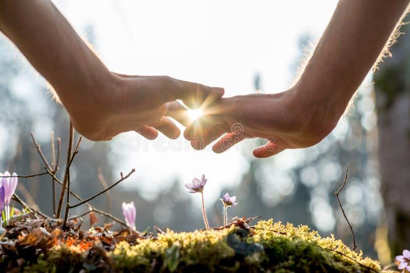 Flores da coberta da mão no jardim com luz solar imagens de stock