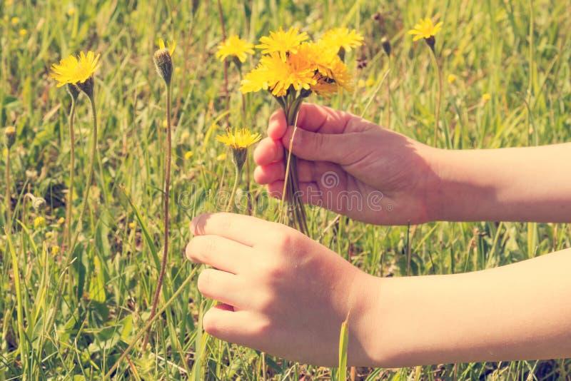 Flores da colheita da menina de um medow fotografia de stock royalty free