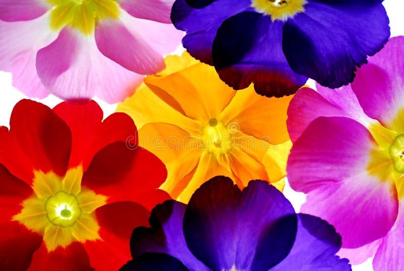 Flores da cor foto de stock