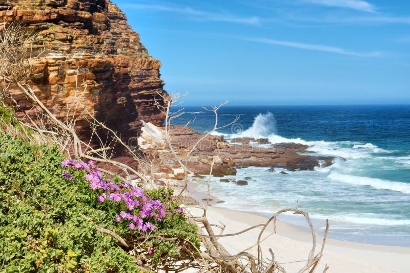 Flores da cor-de-rosa selvagem ao lado da praia enevoada imagens de stock royalty free