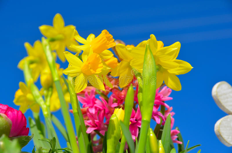 Download Céu Azul Da Mola Das Flores Imagem de Stock - Imagem de nave, flores: 29843331