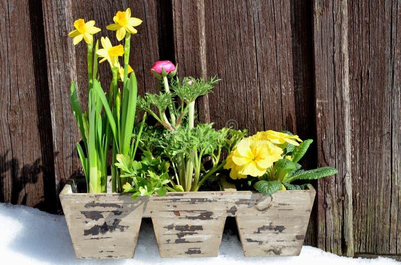 Download Flores no jardim da mola imagem de stock. Imagem de liberdade - 29843295