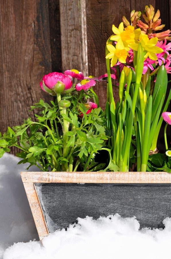 Download Flores no jardim da mola foto de stock. Imagem de colorido - 29843310