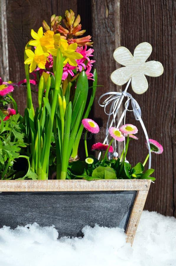 Download Flores no jardim da mola foto de stock. Imagem de shabby - 29843318
