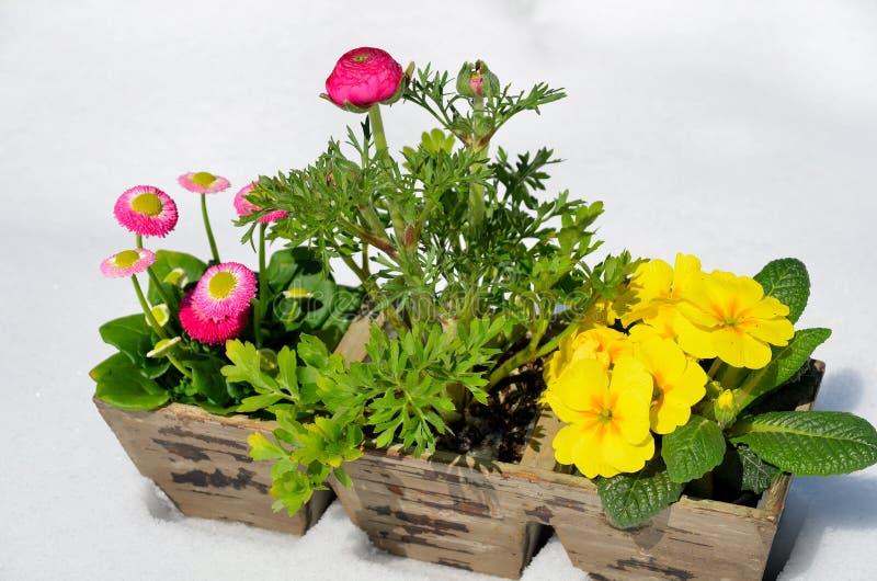 Download Flores no jardim da mola imagem de stock. Imagem de azul - 29843339