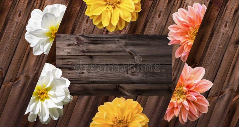 Flores da dália na madeira velha foto de stock royalty free