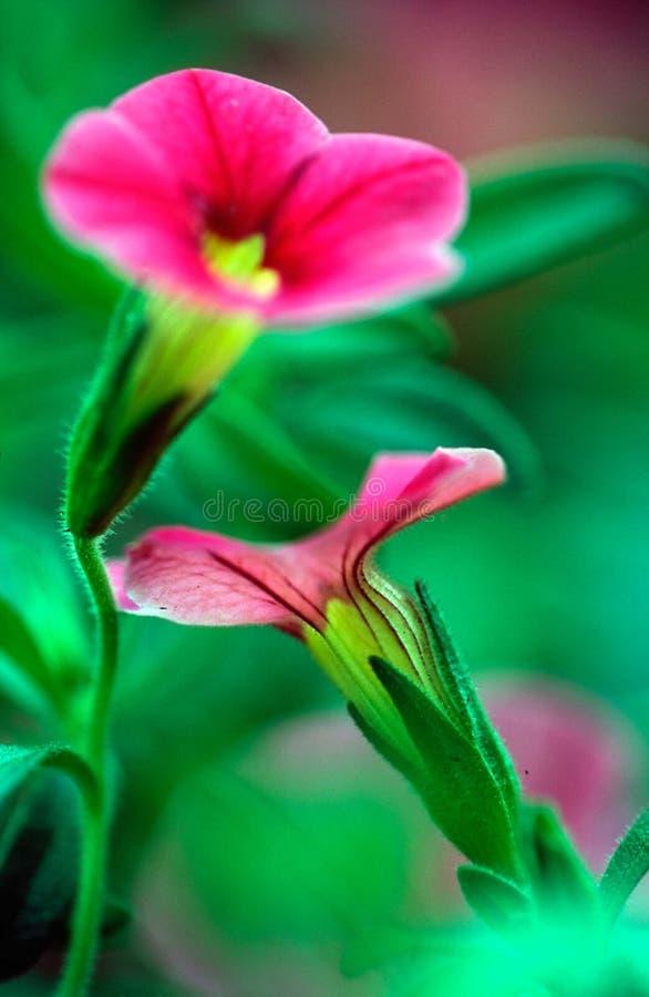 Flores Da Dança Imagem de Stock