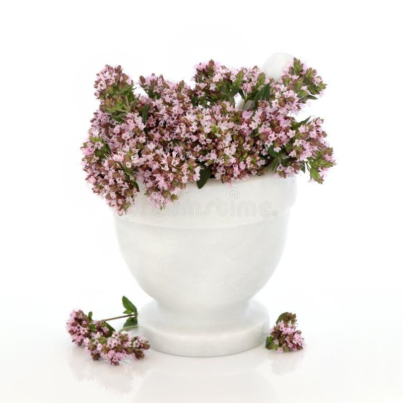 Flores da erva do tomilho foto de stock