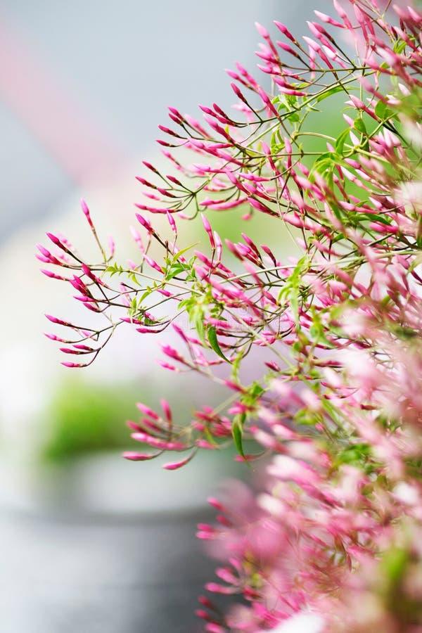 Flores da flor foto de stock