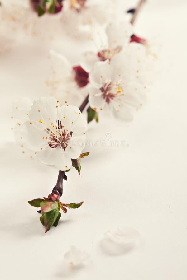 Flores da flor da mola. foto de stock