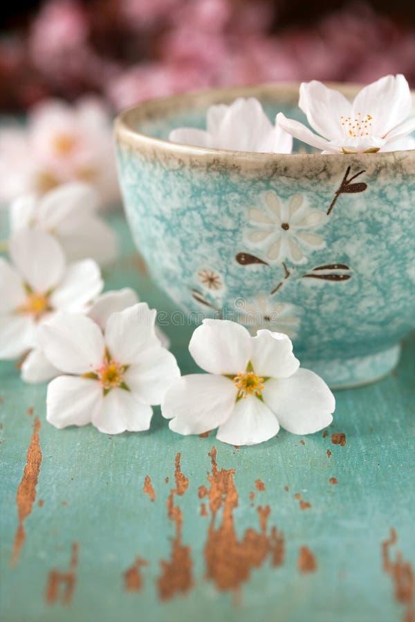 Flores da flor da primavera fotografia de stock royalty free