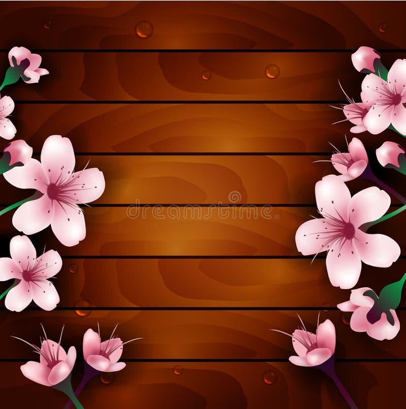 Flores da flor de cerejeira no fundo de madeira ilustração royalty free