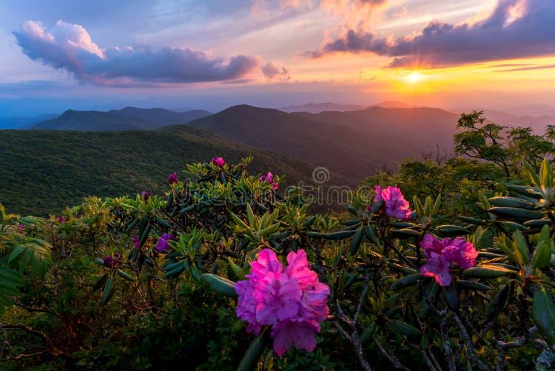 Flores da flor em Ridge Mountains azul imagens de stock royalty free