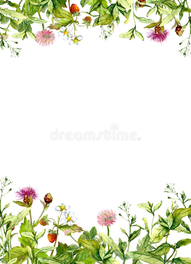 Flores da flor, grama da mola, ervas Beira floral do quadro watercolor foto de stock