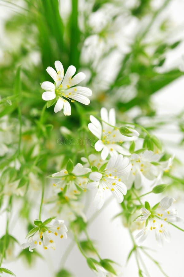Flores da floresta imagem de stock royalty free