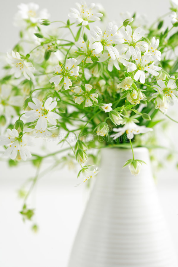 Flores da floresta foto de stock royalty free