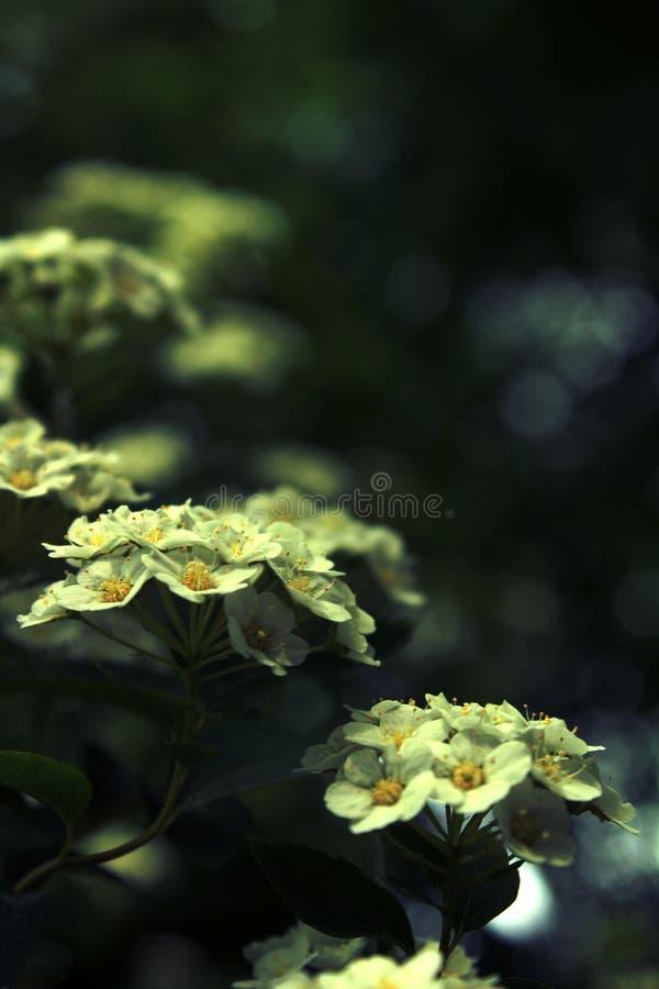 Flores da floresta fotos de stock