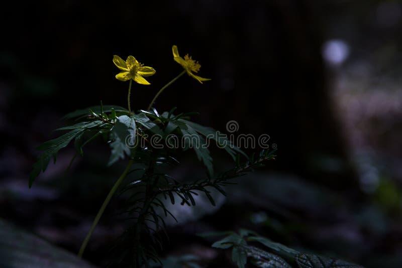 Flores da floresta na mola adiantada imagem de stock