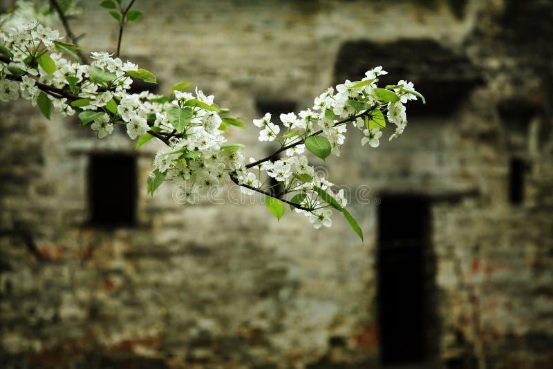 Flores da fruta fotografia de stock