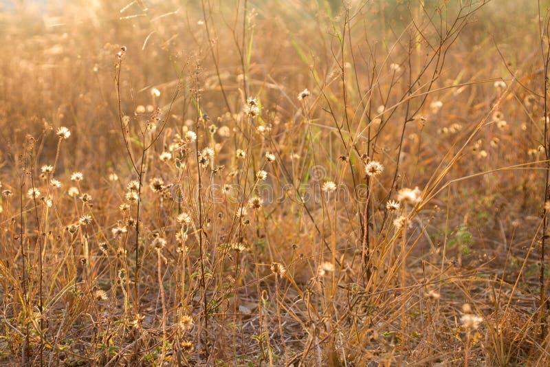Flores da grama ao longo do caminho, ramalhete de flores selvagens secadas imagens de stock royalty free