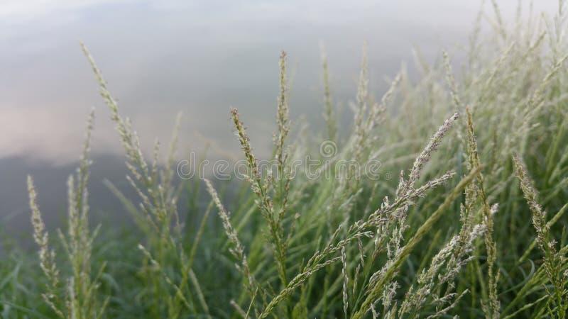 Flores da grama de prado fotos de stock