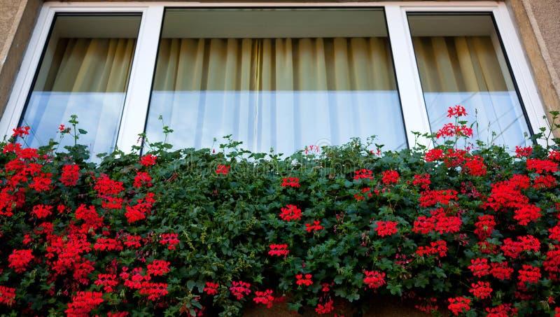 Flores da janela fotografia de stock royalty free