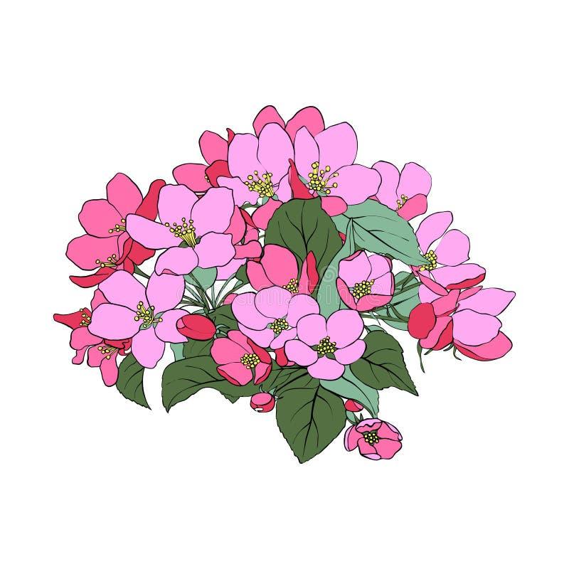 Flores da maçã do vetor ilustração do vetor