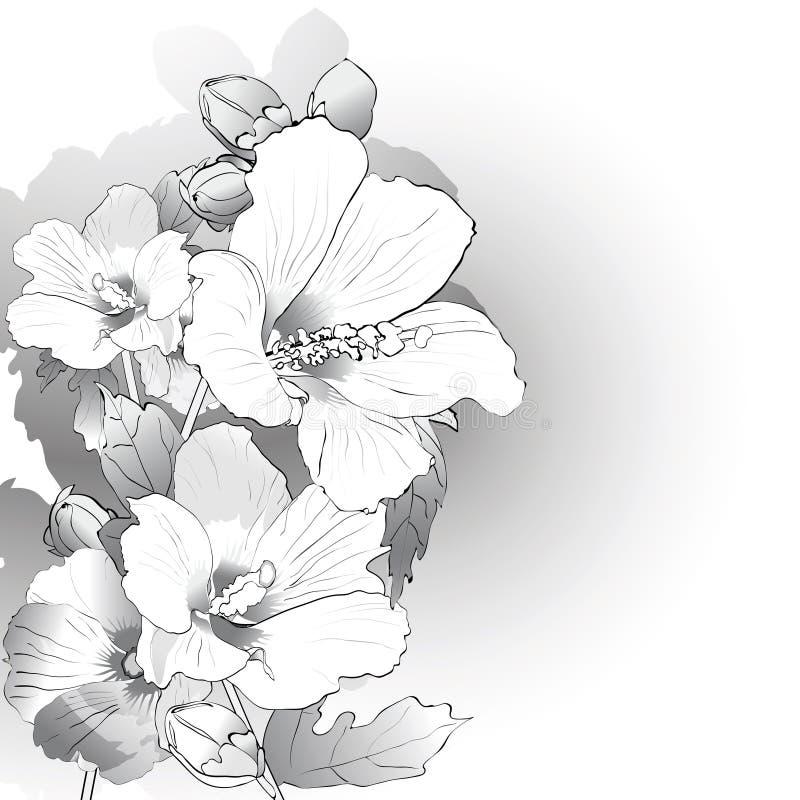 Flores da malva em preto e branco ilustração royalty free