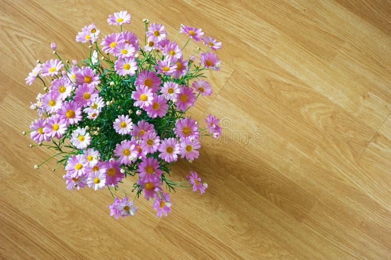 Flores da margarida de Marguerite em cores cor-de-rosa imagens de stock