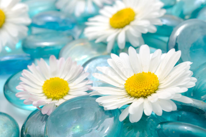 Flores da margarida em pedras de vidro azuis imagens de stock royalty free