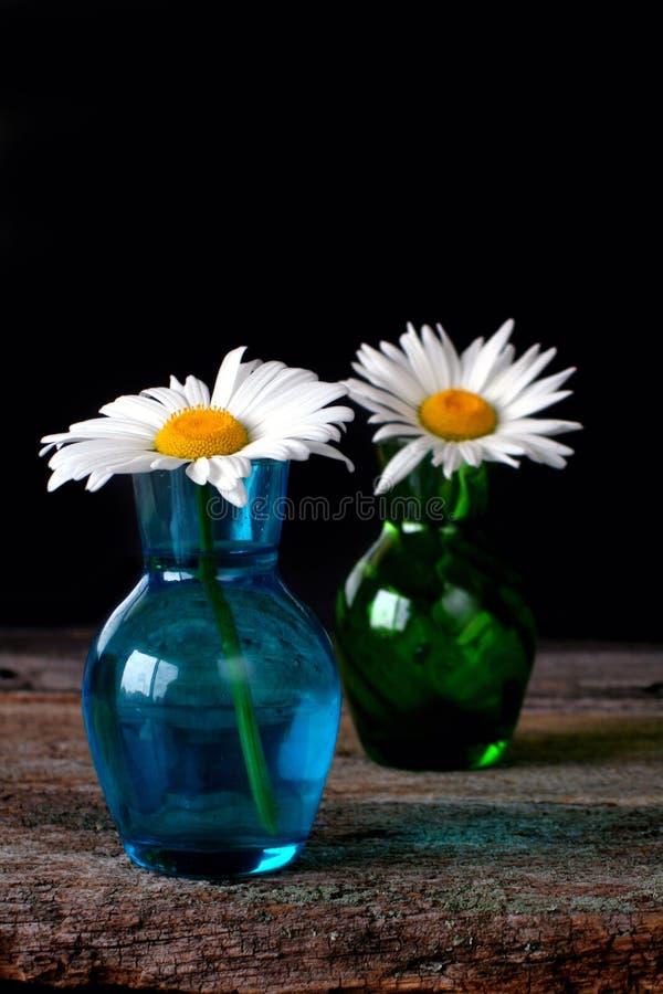 Flores da margarida nos vasos de vidro imagens de stock